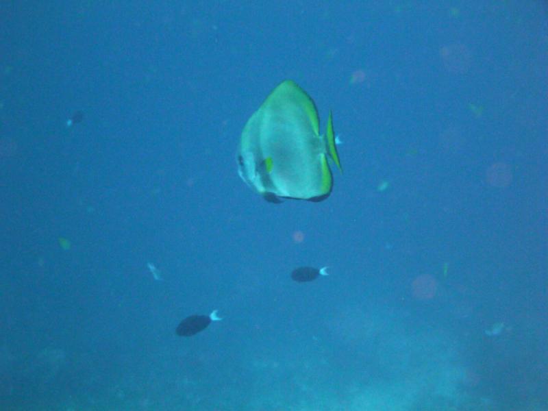 duiken-menjangan-39