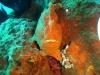duiken-menjangan-16