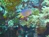 duiken-menjangan-28